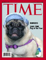 Pug of the Year